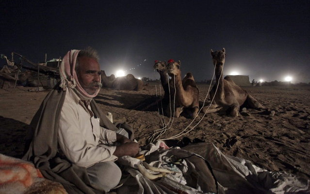 An Indian camel herder sits holding his camels on leashes as he settles for the night at the annual cattle fair in Pushkar, in the western Indian state of Rajasthan, India, Saturday, November 9, 2013. (Photo by Ajit Solanki/AP Photo)