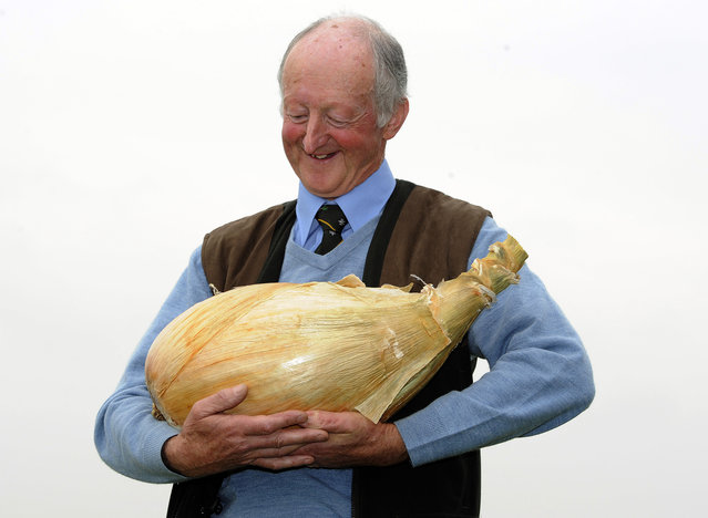 Grower Pete Glazebrook poses for photographers with his onion weighing 17lb 15.5oz (8.150kg), that now holds the world record holder for being the heaviest onion, at the Harrogate Autumn Flower Show in Harrogate, northern England September 16, 2011. The show marking its 100th year, has introduced a giant vegetable class for the first time. (Photo by Nigel Roddis/Reuters)