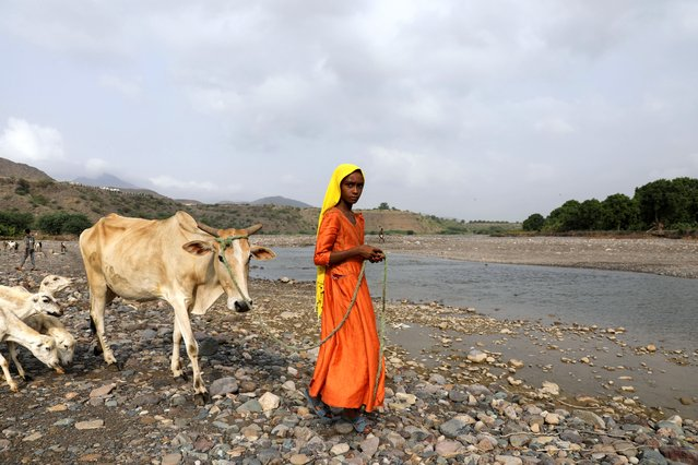 A girl looks on as she leads her cow across a spring lake in Khamis Banisaad district of al-Mahweet province, Yemen, June 23, 2021. (Photo by Khaled Abdullah/Reuters)