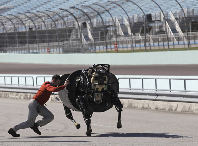 An unidentified LS3 team member shoves an LS 3 (Legged Squad Support System) robot that was galloping off course, back on track during a high-speed demonstration in Homestead, Florida December 20, 2013. (Photo by Andrew Innerarity/Reuters)