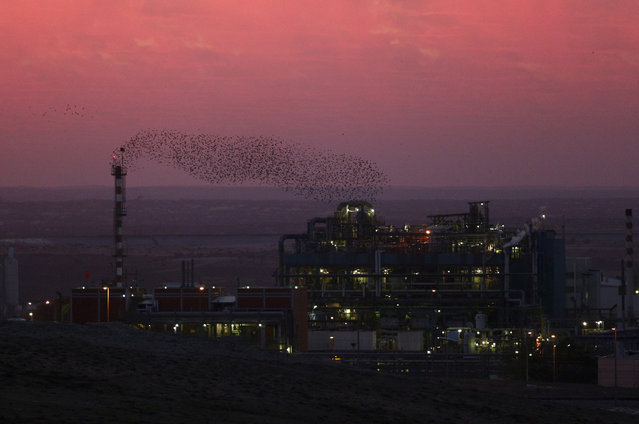 Migrating starlings fly across the sky, in southern Israel December 28, 2015. (Photo by Amir Cohen/Reuters)