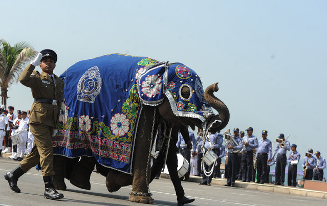 The Sri Lankan police mascot, a baby elephant takes part in an Independence Day parade rehearsal in Colombo on February 2, 2017. Sri Lanka is preparing to mark the 69th anniversary of independence from Britain on February 4. (Photo by Lakruwan Wanniarachchi/AFP Photo)