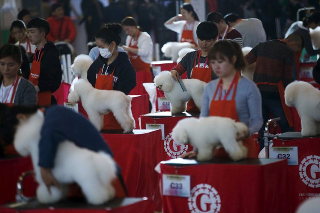 Dog groomers have their dogs' fur cut as part of a grooming test during the Shanghai International Pet Expo in Shanghai, China, March 17, 2016. (Photo by Aly Song/Reuters)