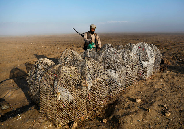 Jan Agha, 49, an Afghan hunter, gives water to his cranes at a field in Bagram, Parwan province, Afghanistan on April 10, 2019. As the early morning light breaks over the plain north of Kabul, bird hunter Jan Agha checks his snares as he has done for the past 30 years, hoping to catch a crane, using a tethered bird to lure others down to the nets. (Photo by Mohammad Ismail/Reuters)