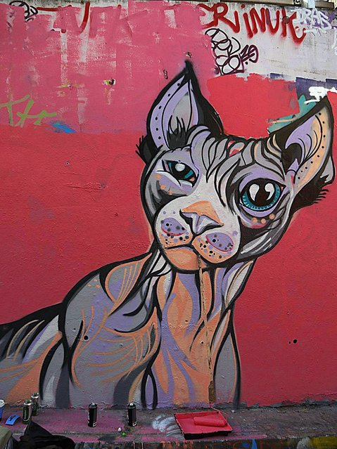 A mural of a cat, by Susie Lowe/Suzko. (Photo by Dez Mighty/Susan Mackey)