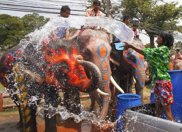 A girl splashes elephants with water in celebration of the Songkran water festival in Thailand's Ayutthaya province, April 9, 2014. (Photo by Chaiwat Subprasom/Reuters)