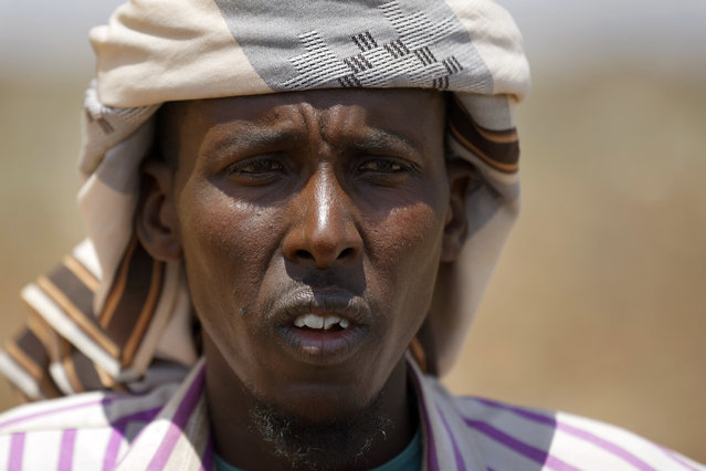 """In this photo taken Wednesday, March 8, 2017, herder Ahmed Haji, 30, recounts how he trekked thousands of kilometers with his herd in search of greener pasture in a remote desert area near Bandar Beyla in Somalia's semiautonomous northeastern state of Puntland. Ahmed Haji turns from his visibly dehydrated animals and whispers: """"I am lost"""". Trying to flee the worsening drought, he trekked thousands of kilometers with a herd that once numbered 1,200. But hundreds perished during the arduous trip to Puntland, in northern Somalia, in search of greener pasture. The land here dried up not long after he arrived, leaving his animals weak from hunger and thirst. """"They are now dying one by one"""", the 30-year-old said, shading his face from the scorching sun. His goats drank water from a plastic barrel and picked dry leaves from plants nearby. """"I don't even think these remaining ones will survive in the next two months"""", Haji said. He left his wife and five children behind on his eight-day trek, fearing they wouldn't survive. Now he wonders about himself. Somalia has declared this drought a national disaster, part of what the United Nations calls the largest humanitarian crisis since the world body was founded in 1945. An estimated 6 million people in this Horn of Africa nation, or about half the population, need aid amid warnings of a full-blown famine. Two consecutive seasons of poor rainfall, longer in some areas, have caused large-scale crop failures, the U.N. humanitarian agency says. It is not clear how many people, or animals, have died so far. Animals are central to many in Somalia. The United Nations says more than half the population is engaged in the livestock industry. The drought threatens their main sources of nutrition and survival. Many wells have dried up, forcing herders to risk long treks to remote areas. Water prices have spiked, with a single water tanker now going for $150. Somalia is part of a massive $4 billion aid appeal launched last month for four nat"""