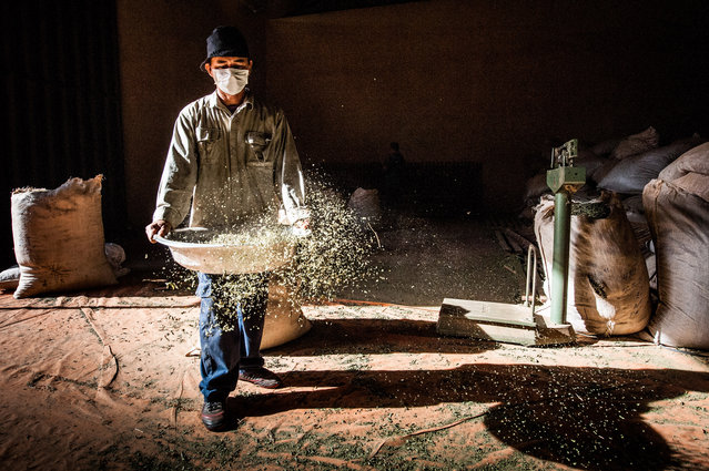 CGAP Photo Contest – Sieving Lemon Verbena, Paraguay. A cooperative is helping the farmers in this region to improve their production of lemon verbena and lemongrass. It also provides new markets for the farmers which has changed the farmer's lives. (Photo by Wim Opmeer)