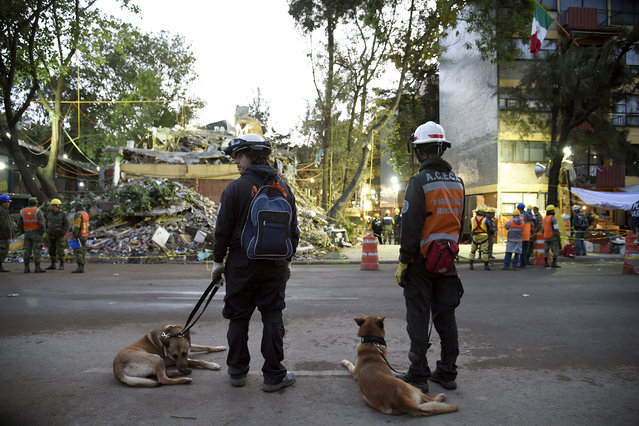 Two Argentinian rescue workers take a break with their sniffer dogs while participating in the search for survivors at a flattened building in Mexico City on September 24, 2017, five days after the devastating quake that hit central Mexico. (Photo by Alfredo Estrella/AFP Photo)