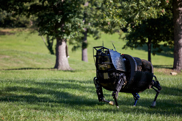 Resembling a headless horse, a robotic Legged Squad Support System (LS3) developed by the Defense Advanced Research Projects Agency navigates terrain during a demonstration at Joint Base Myer-Henderson Hall, Fort Myer, Virginia, on September 10, 2012. The LS3 is being developed for use by the U.S. military to carry heavy loads and equipment over a variety of terrain. (Photo by Sgt. Mallory S. VanderSchans/USMC)