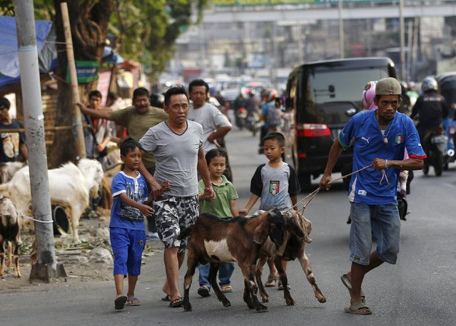 Goats are led across a busy street after they were purchased from a makeshift livestock market ahead of the Eid al-Adha festival in Jakarta September 23, 2015. (Photo by Darren Whiteside/Reuters)
