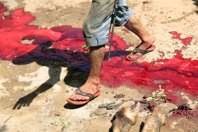 A butcher walks across the blood of a just-slaughtered calf on the first day of Eid al-Adha festival in Toukh, El-Kalubia governorate, northeast of Cairo, Egypt, September 24, 2015. (Photo by Amr Abdallah Dalsh/Reuters)