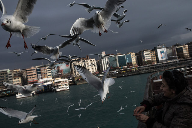 A woman feeds seagulls from a ferry crossing the Bosphorus on January 16, 2018 in Istanbul, Turkey. (Photo by Chris McGrath/Getty Images)