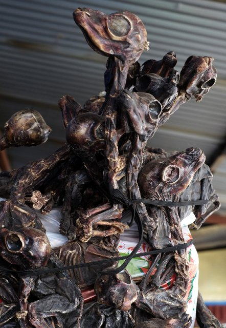 Dried llama foetuses are seen for sale as offerings at the witches market of El Alto, on the outskirts of La Paz, December 31, 2014. (Photo by David Mercado/Reuters)