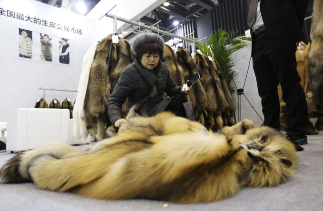 A buyer checks the quality of the fur of farmed fox on display at the 2015 China Fur and Leather Products Fair in Beijing, January 15, 2015. (Photo by Jason Lee/Reuters)