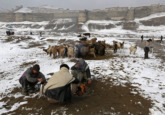 Afghans have tea as they sell sheep in an open livestock market near Bala Hissar, an old fortress in Kabul January 25, 2015. (Photo by Mohammad Ismail/Reuters)
