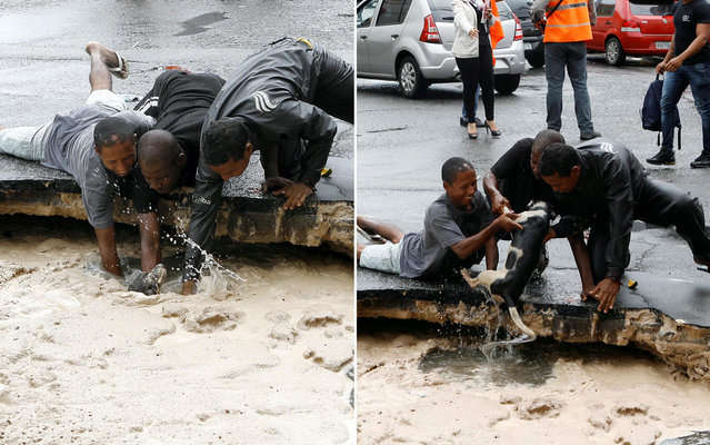 Locals rescue the dog who has fallen in a gully formed after heavy rain in the Lower City, in Salvador, on Oktober 10, 2013. (Photo by Marco Aurélio Martins/Ag. A Tarde/Folhapress)