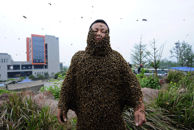 Beekeeper She Ping is covered with bees during a challenge to break the world record in Chongqing Municipality, April 18, 2012. She Ping, 32, broke the world record on Wednesday by covering his body with 33.1 kilograms of bees (about 331,000 bees), overtaking the last world record of 26.8 kilograms of bees which was attempted by a Jiangxi province beekeeper Ruan Liangming in 2008, local media reported. (Photo by Reuters/China Daily)