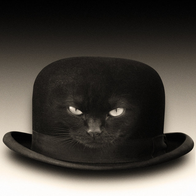 """""""(c)hat"""". (Photo and caption by Yves Lecoq)"""