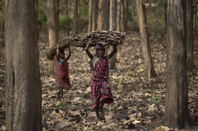 In this Tuesday, March 31, 2015 photo, Indian women walk carrying firewood they collected from a forest at Gobhali village on the outskirts of Gauhati, India. Every evening, hundreds of millions of Indian women hover over crude stoves making dinner for their families. They feed the flames with polluting fuels like kerosene or cow dung, and breathe the acrid smoke wafting from the fires. (Photo by Anupam Nath/AP Photo)