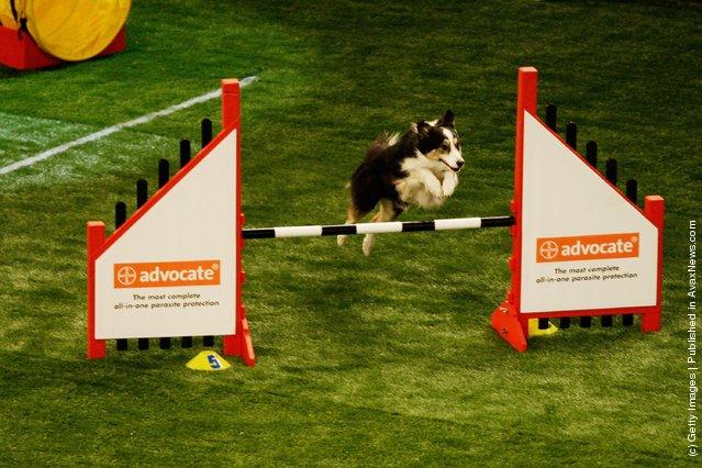 World Dog Games
