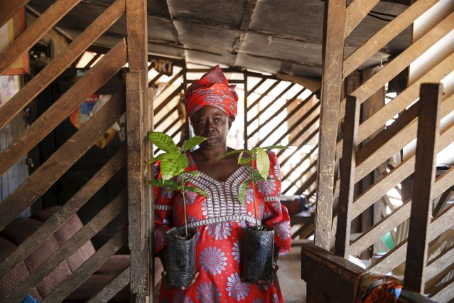 Chairperson of the Tonikoko farmers' cooperative association Olori Ronke Akindoju holds samples of Cocoa plants in front of her home during an interview with Reuters in ile-Oluji village, in Ondo state, southwest Nigeria March 29, 2016. (Photo by Akintunde Akinleye/Reuters)