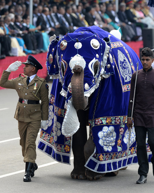 Sri Lankan military personnel march with a baby elephant during the island's 71st Independence Day celebrations in Colombo on February 4, 2019. Sri Lanka is marking the 71st anniversary of independence from Britain on February 4. (Photo by Lakruwan Wanniarachchi/AFP Photo)