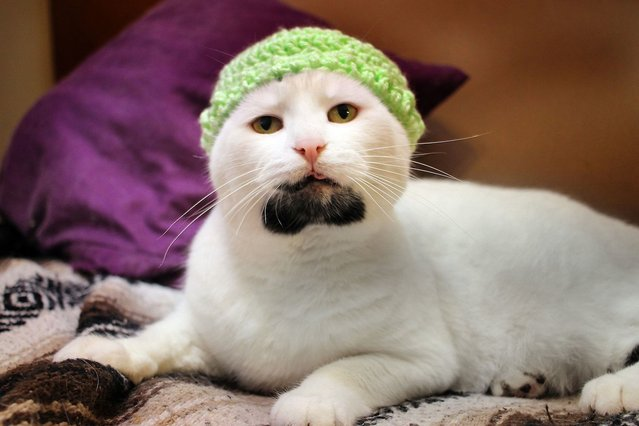 Gary The Hipster Cat