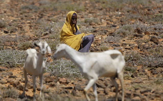 In this photo taken Wednesday, March 8, 2017, a woman herder sits with her goats in a remote desert area near Bandar Beyla in Somalia's semiautonomous northeastern state of Puntland. Somalia has declared the drought a national disaster, part of what the United Nations calls the largest humanitarian crisis since the world body was founded in 1945, and with animals being central to many the drought threatens their main sources of nutrition and survival. (Photo by Ben Curtis/AP Photo)