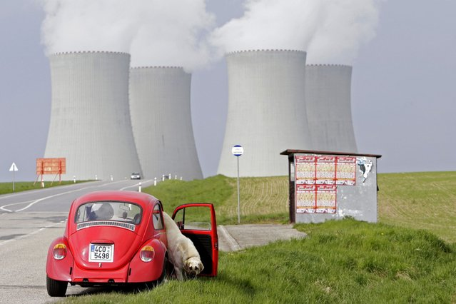 A dog gets out of a car in front of cooling towers of the Temelin nuclear power plant near the South Bohemian city of Tyn nad Vltavou. (Photo by David W. Cerny/Reuters)