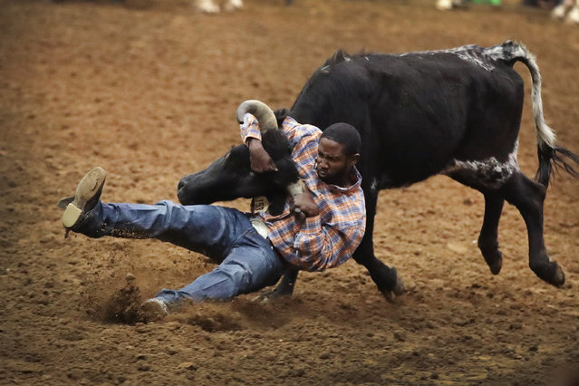 Charles Barrett competes in the bull doggin event at the Bill Pickett Invitational Rodeo on March 31, 2017 in Memphis, Tennessee. (Photo by Scott Olson/Getty Images)