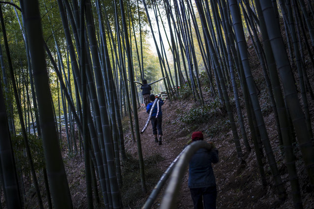This picture taken on April 12, 2017 shows men carrying bamboo through a forest near Dashan village near the city of Lin'an, Zhejiang Province. Lin'an is in a area of eastern Zhejiang province whose rich bamboo forests are estimated to supply up to two-thirds of China's bamboo shoots, plus a range of other products derived from the fast-growing plant that are produced both for domestic and overseas markets. (Photo by Johannes Eisele/AFP Photo)