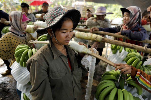 A woman waits to deliver her harvest in a packing line at a banana plantation operated by a Chinese company in the province of Bokeo in Laos April 25, 2017. (Photo by Jorge Silva/Reuters)