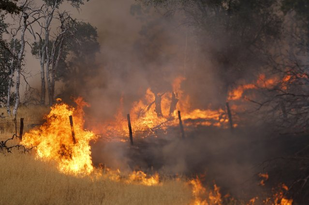 Flames from the so-called Jerusalem Fire erupt along a fence line in Lake County, California, August 12, 2015.  The wildfire running rampant through drought-parched vegetation in northern California grew by several thousand acres overnight into Wednesday, as firefighters worked to stop the flames from spreading toward communities. (Photo by Robert Galbraith/Reuters)