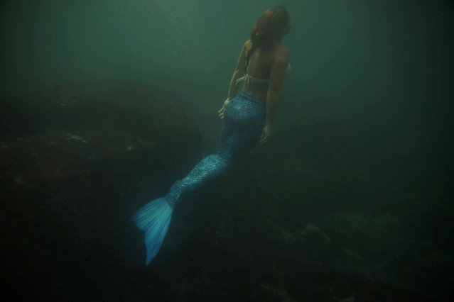Mermaid and diving instructor Luciana Fuzetti trains whilst wearing a mermaid tail in the Tijucas Islands in Rio de Janeiro, Brazil July 22, 2017. (Photo by Pilar Olivares/Reuters)