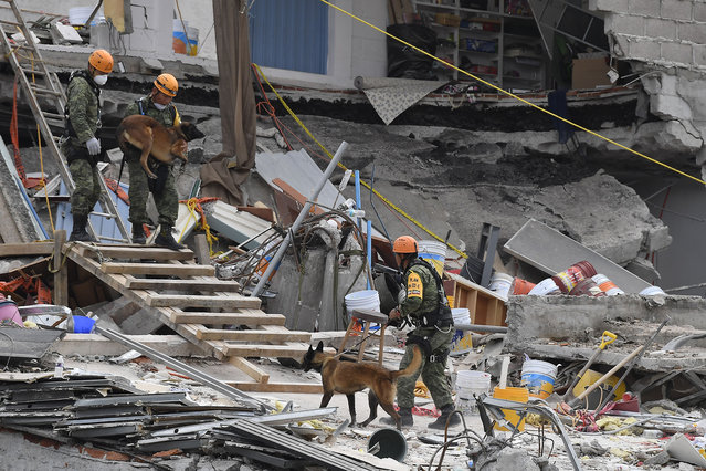 Sniffer dogs take part in the search for survivors at a flattened building in Mexico City in the early hours of the morning on September 24, 2017, five days after the devastating quake that hit central Mexico. (Photo by Omar Torres/AFP Photo)