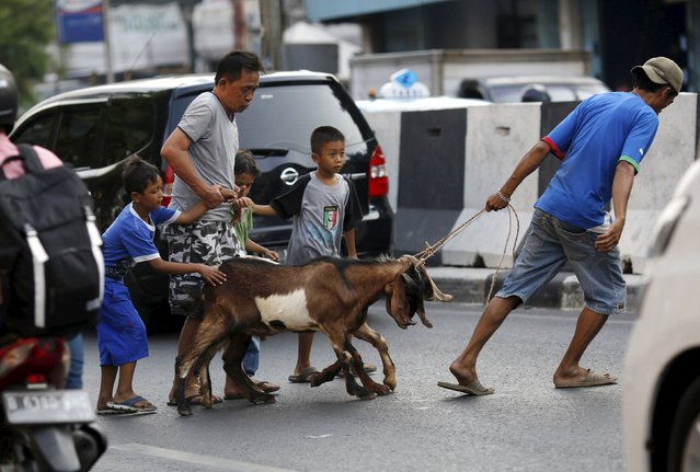 Goats are led across a busy street after they were purchased from a makeshift livestock market ahead of the Eid al-Adha festival in Jakarta September 23, 2015. (Photo by Nyimas Laula/Reuters)