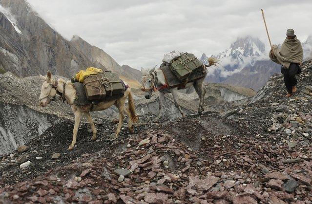 A local farmer drives his mules down the rock-covered Baltoro glacier near Urdokas along the K2 base camp trek in the Karakoram mountain range in Pakistan September 2, 2014. (Photo by Wolfgang Rattay/Reuters)