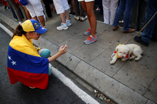 A protester takes pictures of a dog wearing the Venezuelan flag around his neck during a demonstration to demand a referendum to remove Venezuela's President Nicolas Maduro, in Madrid, Spain, September 4, 2016. (Photo by Susana Vera/Reuters)