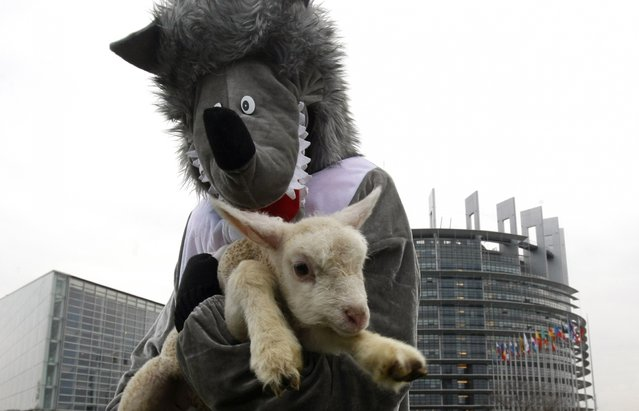 A girl dressed up as a wolf holds a lamb during a protest in front of the European Parliament Wednesday November 26, 2014 in Strasbourg, eastern France. Shepherds from east of France demonstrated against the French policy that protects wolves that they say attack their herds. (Photo by Christian Lutz/AP Photo)
