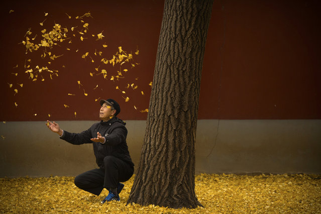 An elderly man tosses fallen gingko tree leaves into the air in a park in Beijing, Friday, November 20, 2015. China's capital has been hit with unusually cool and wet weather in recent weeks. (Photo by Mark Schiefelbein/AP Photo)