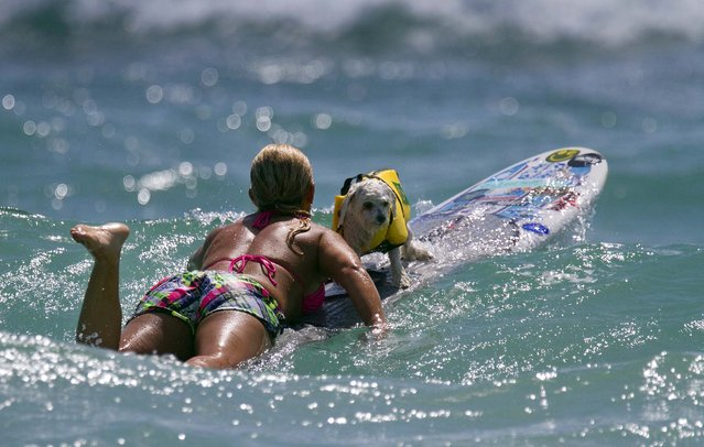 Volunteer Nina Raflowitz  of Jupiter takes rescue dog Moses, a 3-year-old maltese, out to surf. (Photo by Taylor Jones/The Palm Beach Post)