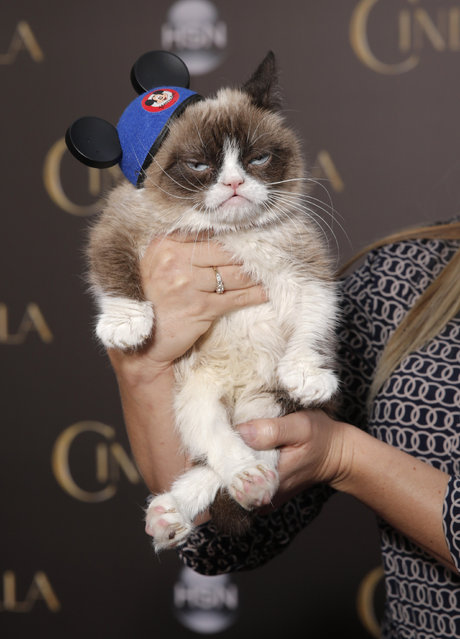 "Grumpy Cat attends the World Premiere Of ""Cinderella"" on Sunday, March 1, 2015, in Los Angeles. (Photo by Todd Williamson/Invision/AP)"