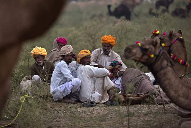 A group of camel traders wearing traditional headgear rest near their camels at Pushkar Fair in the desert Indian state of Rajasthan November 9, 2013. (Photo by Ahmad Masood/Reuters)