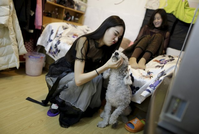 Online hostess Xianggong plays with a pet dog, next to her mother, after a live broadcast at home in Beijing February 13, 2015. (Photo by Jason Lee/Reuters)