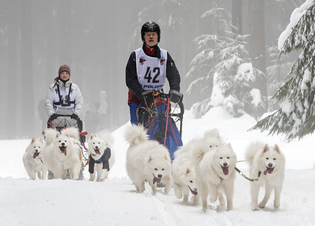 Harry Weiss of Germany, front, competes with his dog-sled during Trans-Thuringia 2017, a t dog-sled race with purebred dogs  near Masserberg, central Germany, Thursday, February 2, 2017. (Photo by Jens Meyer/AP Photo)