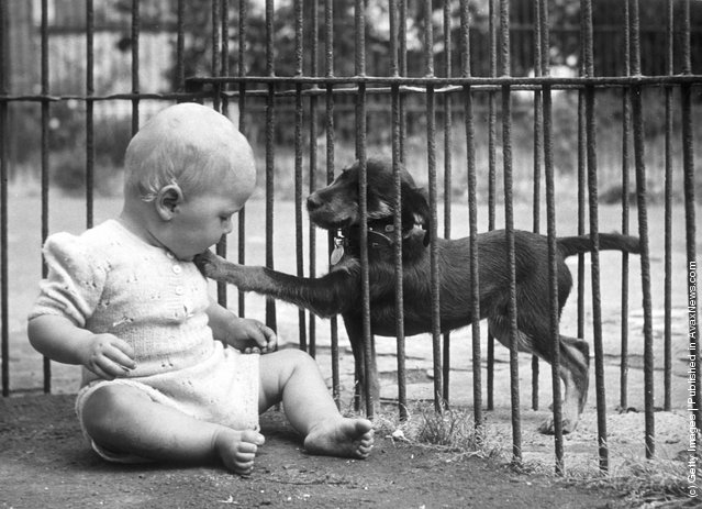 A baby playing with a stray dog at the Brighton Animal Hospital, 1950