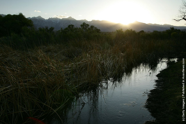 Riparian, or streamside, habitat along the lower Owens River before it empties into Owens Lake