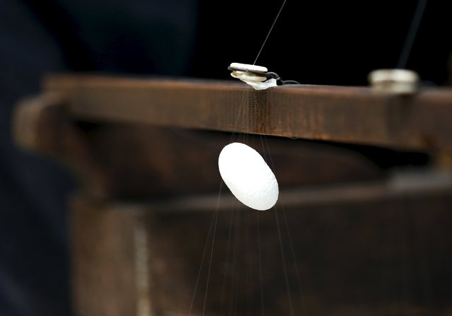 A frame spins a thread of silk from a cocoon on an antique loom at the Campoverde cooperative in Castelfranco Veneto, Italy, June 4, 2015. (Photo by Alessandro Bianchi/Reuters)