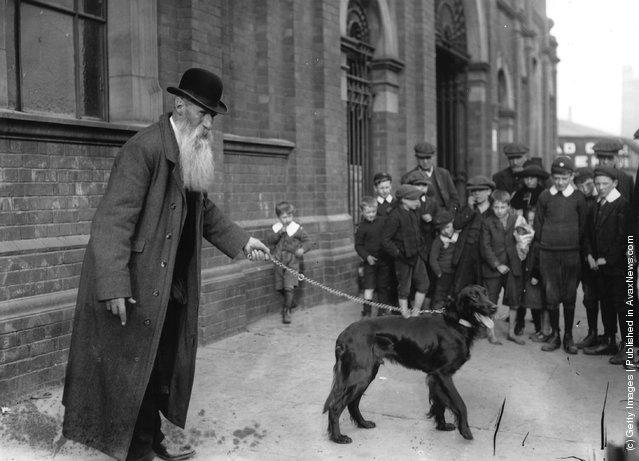 1912: Mr Bond with his Irish Setter 'Derry Sunsrar' arrives at the Belfast Championship Dog Show